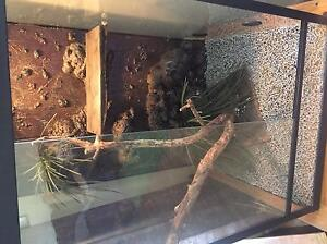 Snake Tank Strathpine Pine Rivers Area Preview