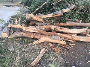 Free Sugar gum trees for firewood Rockbank Melton Area Preview