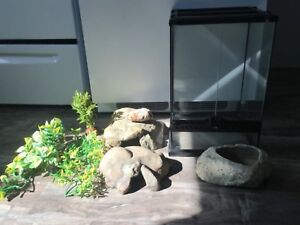 Reptile accessories and tank