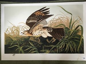 Audubon Limited Edition Print Red Hawk + 8 More Prints
