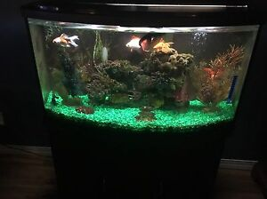 45 Gallon Fish Tank w/ all decorations and fish