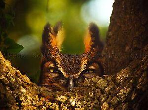 Animal De Aves Con Dibujo De Bho Grandes Con Cuernos presa Cool