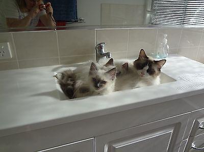 Kitties keeping cool
