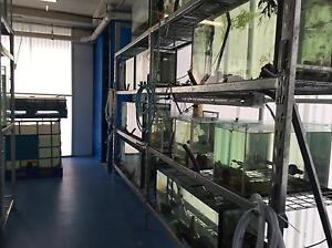 FISH WANTED FOR SCHOOL MARINE LAB Bondi Eastern Suburbs Preview