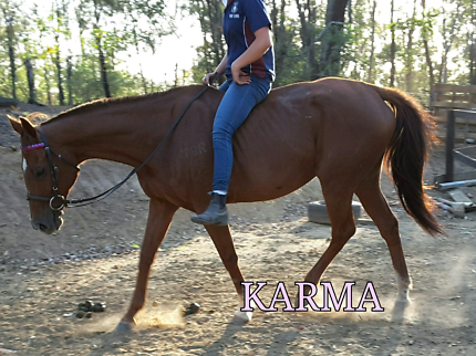 Bargin price for educated mare