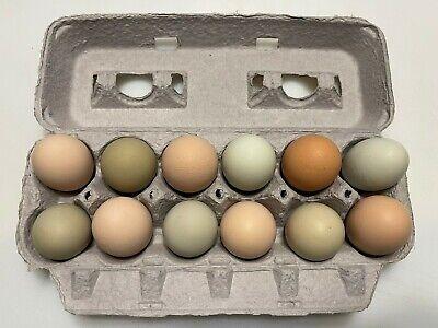 1 Dozen Ameraucana Mix Fertile Organic Unwashed Eggs For Hatching Incubator
