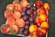 """WANTED"" TENDER FRUIT ACREAGE W/ OR  W/OUT HOME"
