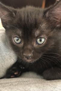 Kittens for sale!!!
