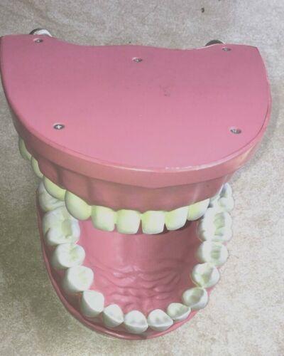 Full Denture Model, Dental Model, Teeth size 5x8 in