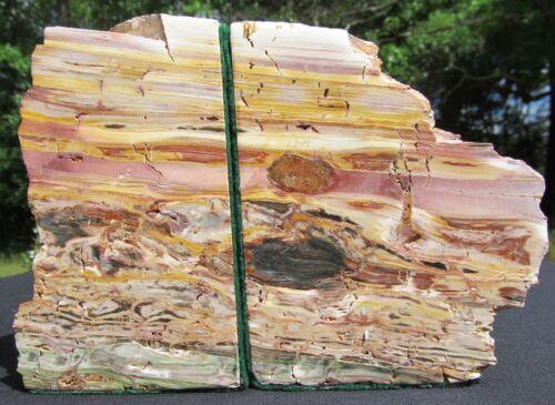 "Rainbow Petrified Wood Bookends 12lbs 3.5oz! 6.5""x 8.5""x 4.5"" NICE!"