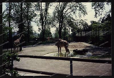 Foto-Stuttgart-Wilhelma-Bad-Cannstatt-Giraffe-Gehege-Architektur-um-1985-24