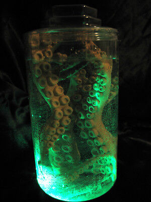 Lighted Jar Octopus Tentacles Mad Scientist Lab Specimen Halloween Party Prop 9