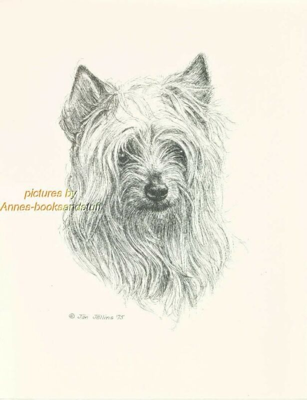 #76 SILKY TERRIER portrait  dog art print * Pen and ink drawing * Jan Jellins
