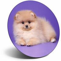 Puppy Spitz Mum Sister Cool Gift #14256 Cute Pomeranian Dog Keyring IP02