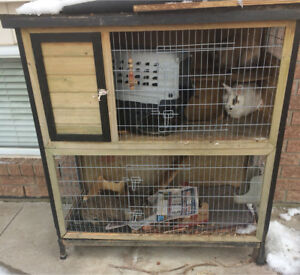 Two rabbits and a beautiful cage