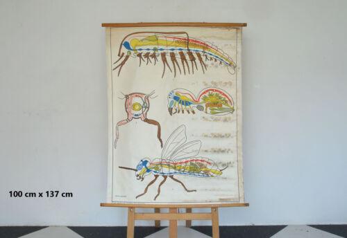 vintage educational school poster old canvas teaching diagram - FREE POSTAGE