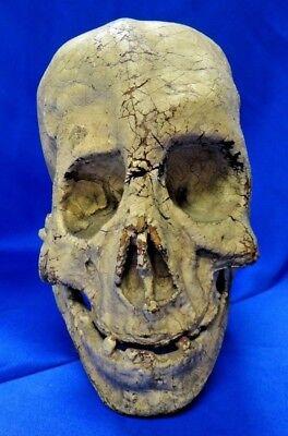 Original Prop Skull From 1935 Movie Bride of Frankenstein Boris Karloff with LOA