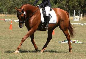 Talented, handsome All-rounder !! Harlin Somerset Area Preview