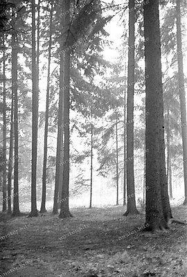 Negativ-Darmstadt-Bäume-Wald-tree-forest-wood-1930er Jahre-1930s-1