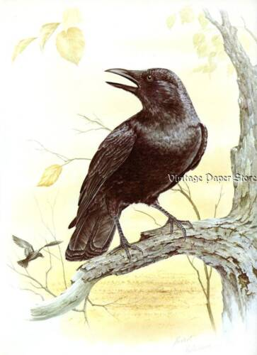Appealing COMMON CROW Bird Bookplate Print