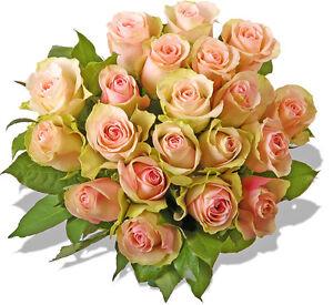 Blumenversand Blumenstrauß Rosenstrauß rosé/creme Rosen