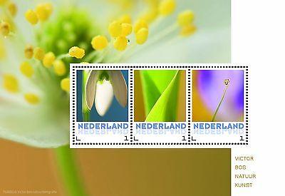 Paises Basos Flores 2 bloque nuevos s