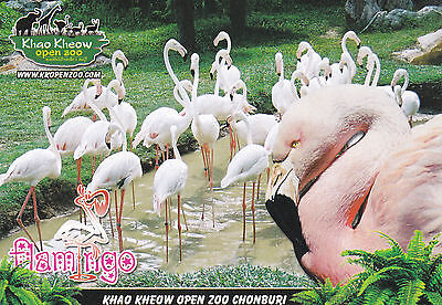 AK KHAO KHEOW OPEN ZOO / Thailand Flamingo Tierpark