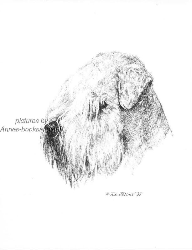 #354 WHEATEN TERRIER  * dog art print * Pen & ink drawing * Jan Jellins