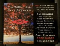 Professional tree and stump services