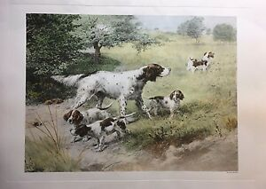 Animals for Sale | eBay