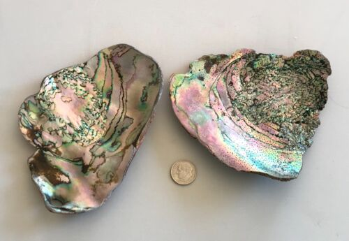 Brightly Colored XL Abalone Shell pieces with beautiful patterns and designs