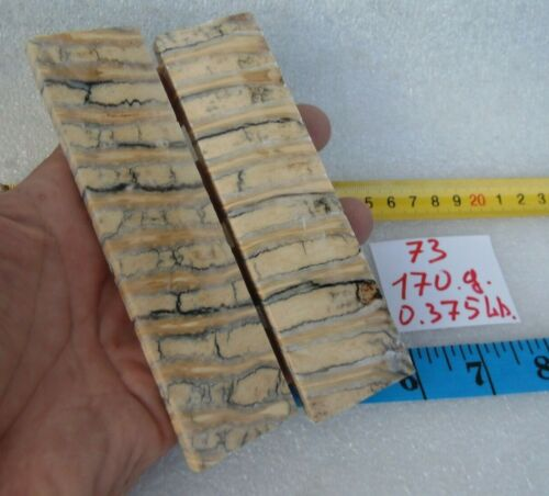 Stabilized Siberian mammoth, plate, handle, cross cut, fossil tooth.