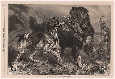 DOGS BIRD HUNTING, GROUSE, antique engraving, original 1868