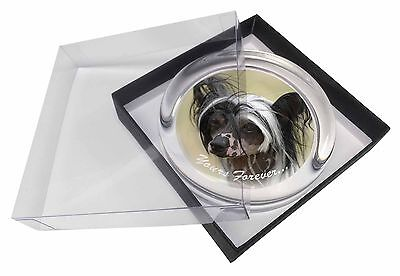 """Chinese Crested Dog """"Yours Forever..."""" Glass Paperweight in Gift Box, AD-CHC2yPW"""