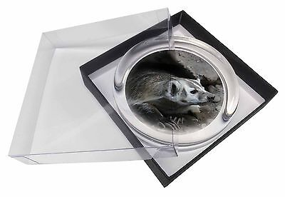 Badger on Watch Glass Paperweight in Gift Box Christmas Present, ABA-2PW
