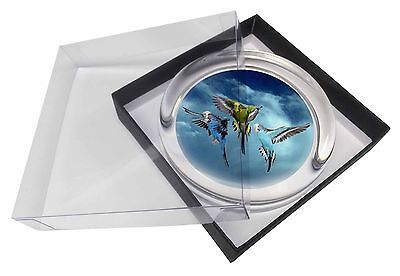 Budgies in Flight Glass Paperweight in Gift Box Christmas Present, AB-96PW