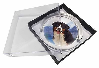 Bernese Mountain Dog Glass Paperweight in Gift Box Christmas Present, AD-BER6PW