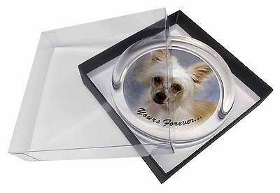 Chinese Crested Powder Puff Dog Glass Paperweight in Gift Box Christ, AD-CHC3yPW
