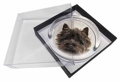Brindle Cairn Terrier Dog Glass Paperweight in Gift Box Christmas Pres, AT-CT2PW