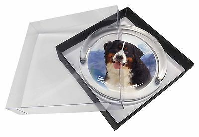 Bernese Mountain Dog Glass Paperweight in Gift Box Christmas Present, AD-BER6yPW