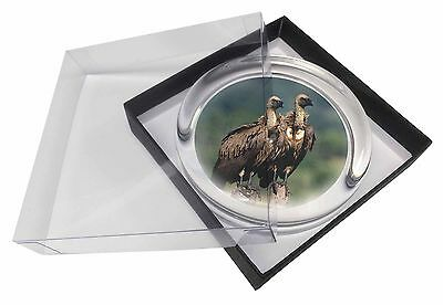 Vultures on Watch Glass Paperweight in Gift Box Christmas Present, AB-92PW
