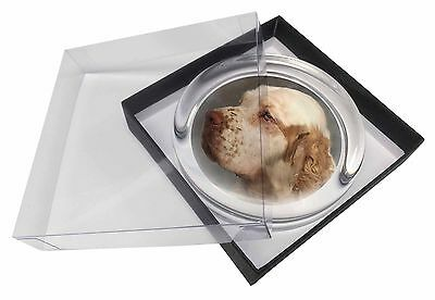 Clumber Spaniel Dog Glass Paperweight in Gift Box Christmas Present, AD-CS1PW