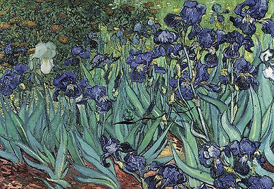 Kunstkarte: Vincent van Gogh - Iris (Schwertlilien)