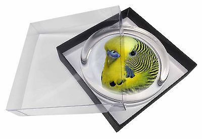 Yellow Budgerigar, Budgie Glass Paperweight in Gift Box Christmas Prese, AB-51PW