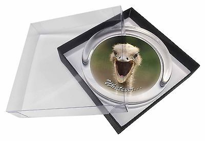 Ostritch with 'Whatever' Glass Paperweight in Gift Box Christmas Prese, AB-OS2PW