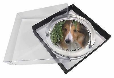 Shetland Sheepdog 'Love You Grandma' Glass Paperweight in Gift Box, AD-SE34lygPW