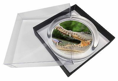 Nile Crocodile, Bird in Mouth Glass Paperweight in Gift Box Christmas P, AR-C2PW