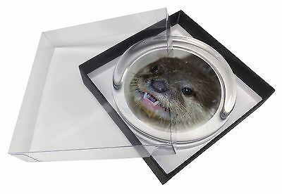 Cheeky Otters Face Glass Paperweight in Gift Box Christmas Present, AO-1PW