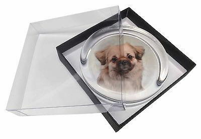 Tibetan Spaniel Dog Glass Paperweight in Gift Box Christmas Present, AD-TS1PW