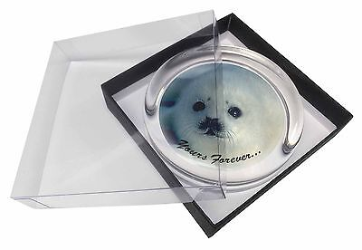 Snow Seal 'Yours Forever' Glass Paperweight in Gift Box Christmas Pres, AF-S14PW
